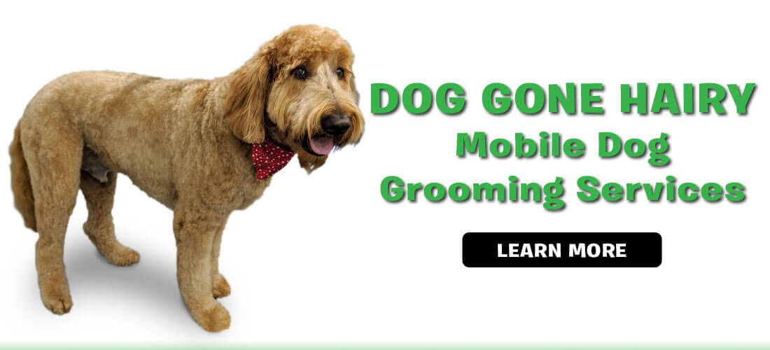 Dog Gone Hairy - Mobile Dog Grooming Services
