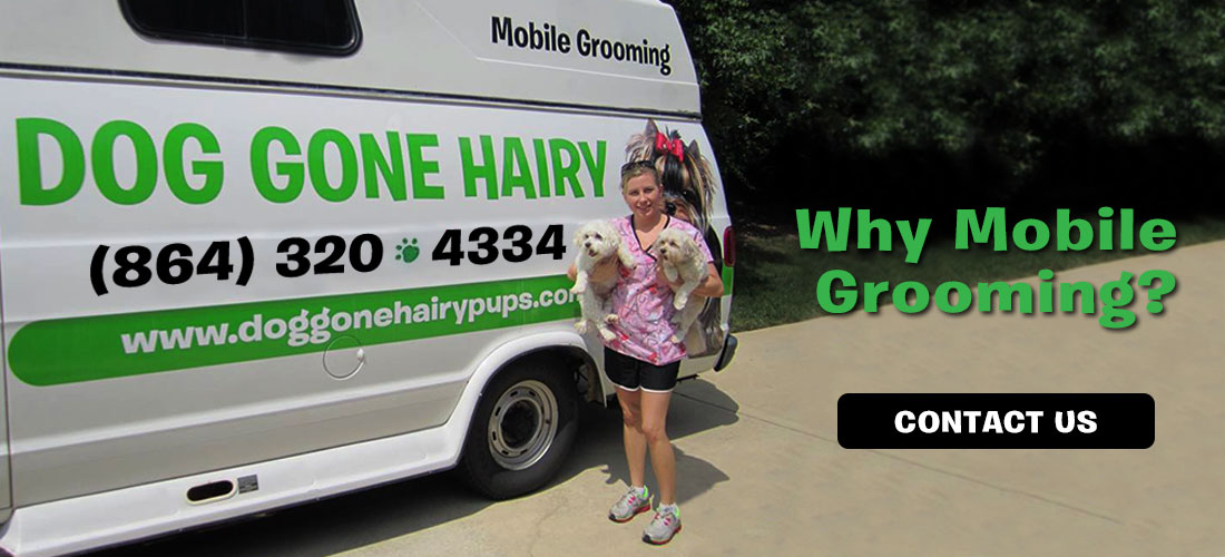Dog Gone Hairy Mobile Grooming