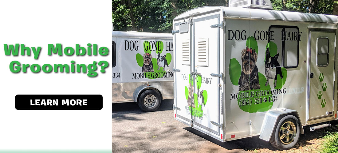 Why Choose Dog Gone Hairy Mobile Dog Grooming?